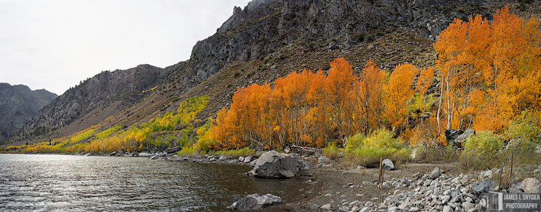 Orange Aspens by Grant Lake