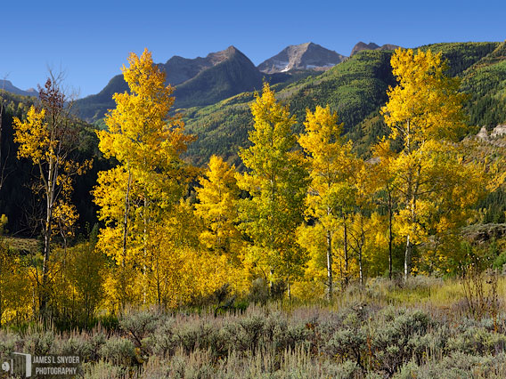 Lemon Aspens and Chair Mountain
