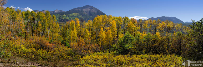 Golden Aspens, West Beckwith Peak