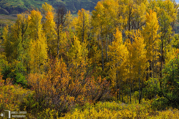 Rocky Mountain Autumn Garden
