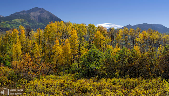 Golden Aspens, West Elk Mountains