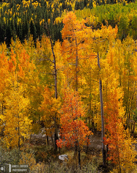 Colorado Autumn Glory