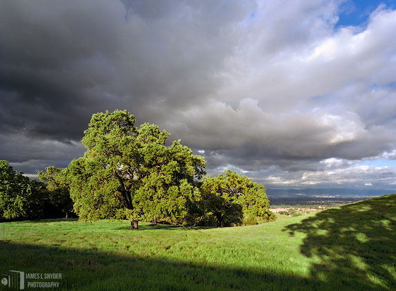 Green Oaks and Storm Clouds