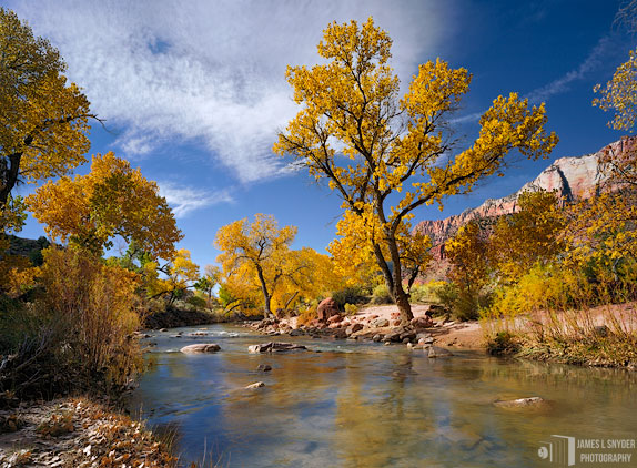 Golden Cottonwoods, Virgin River
